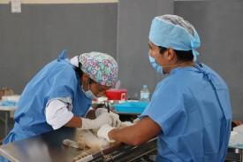 Arranca en slp la semana nacional de esterilización quirúrgica de perros y gatos